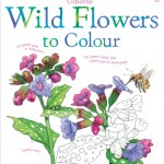 wild-flowers-to-colour