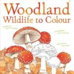 woodland-wildlife-to-colour